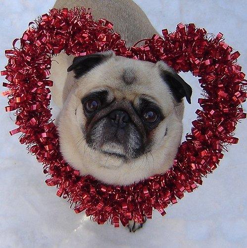 Valentine's Day Pet Love!