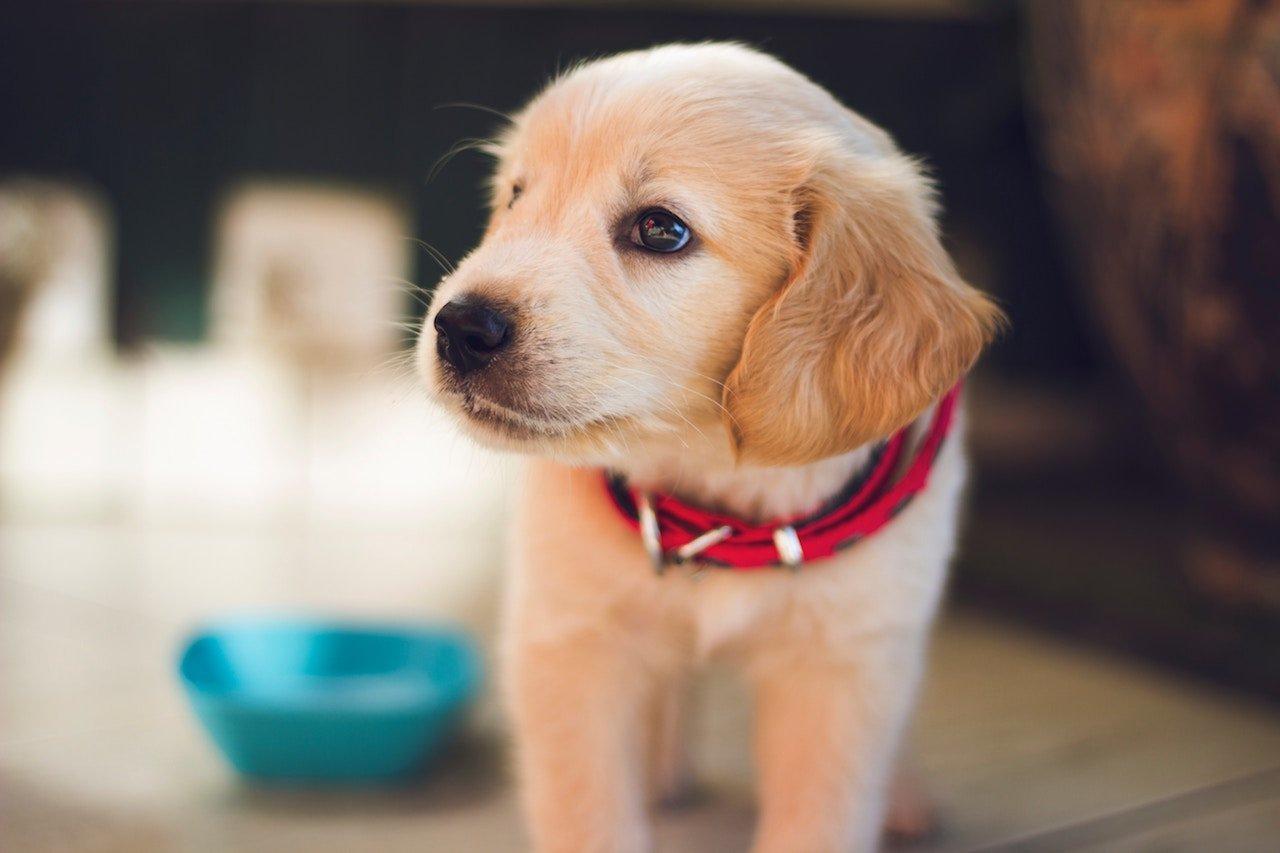 need puppy