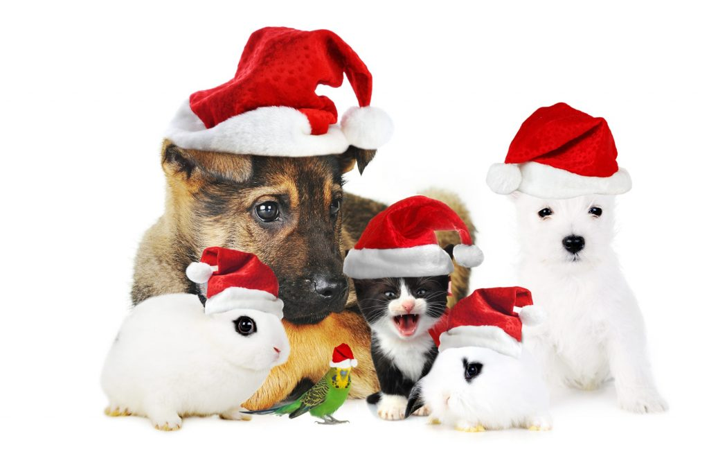 Cute Christmas Puppies.We Wish You Your Family And Pets A Merry Christmas Pet Nanny