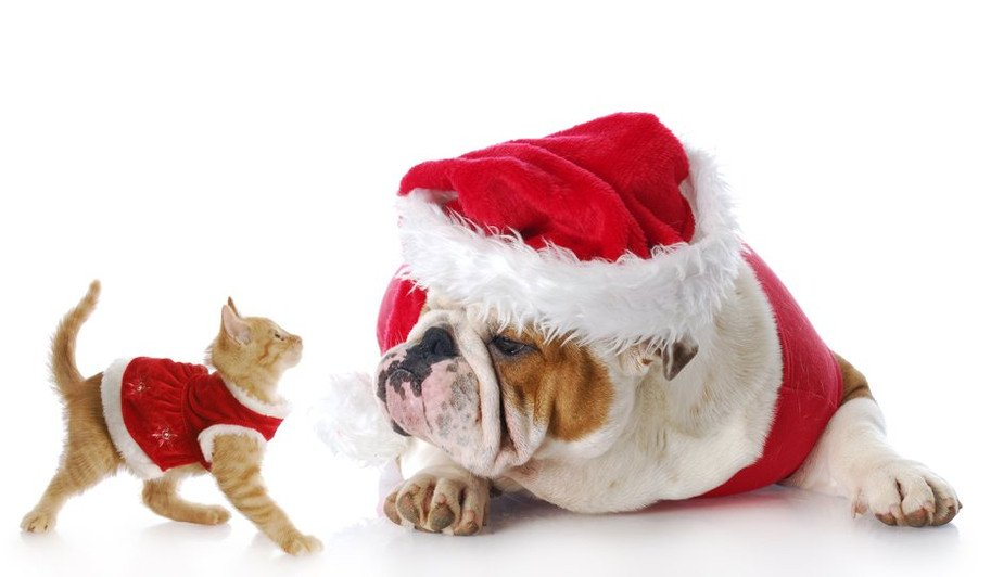 christmas gift ideas for pet lovers and pets part 1 pet nanny